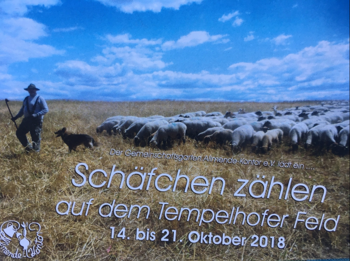 Schafe auf dem TempelhoferFeld!